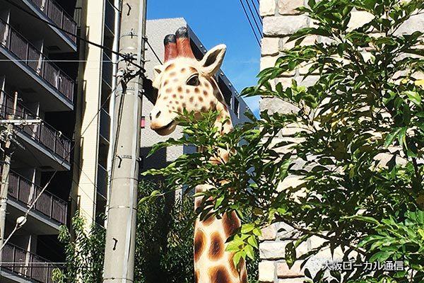 新大阪にいるキリン