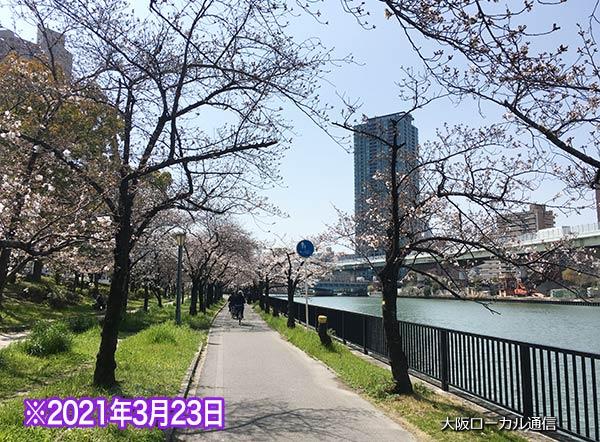 桜ノ宮の桜の開花状況3/21