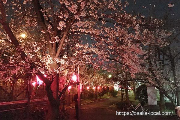桜並木の通り抜け