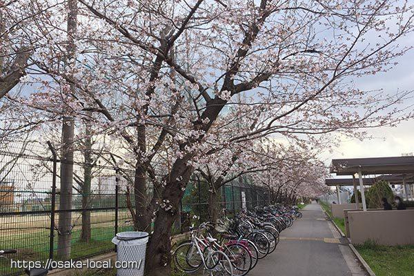 桜の花見スポット 崇禅寺