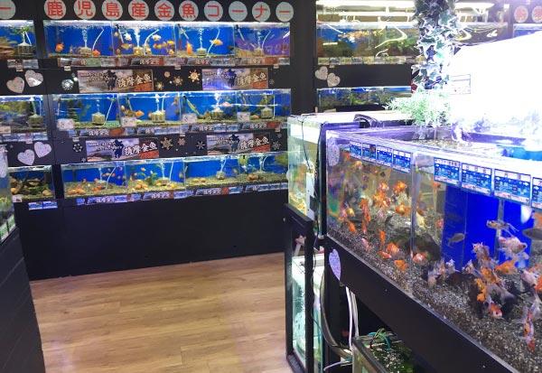 熱帯魚の販売